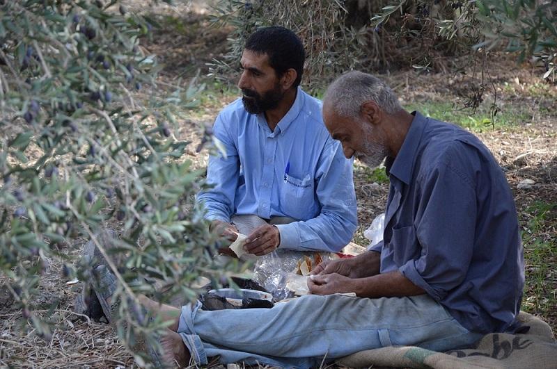 Hombres sirios en Olivar