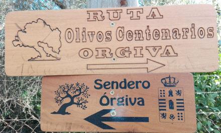 Un paseo por las Alpujarras y sus olivos centenarios