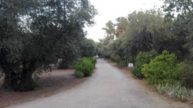 Calles del olivar