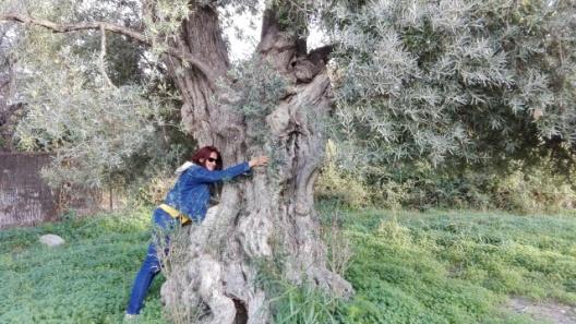 Nieves y el olivo